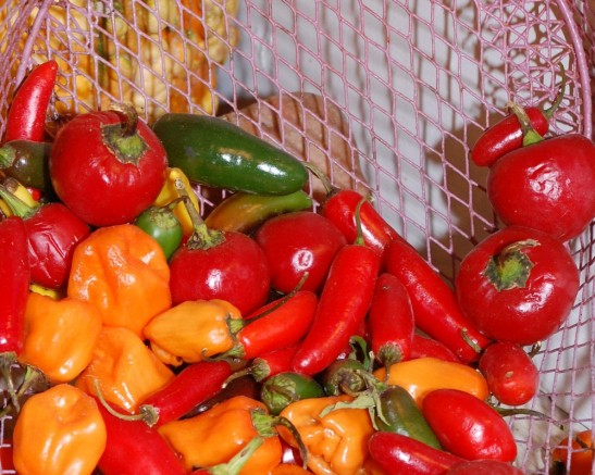 Peppers - delicious and easy to preserve.
