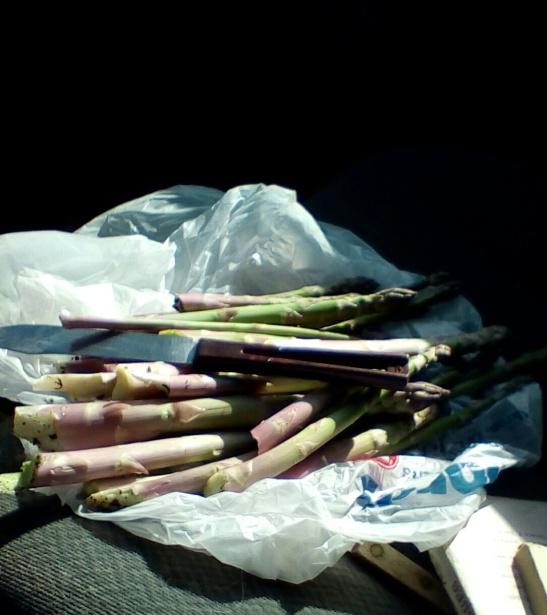 Fresh-cut asparagus (from a secret location)
